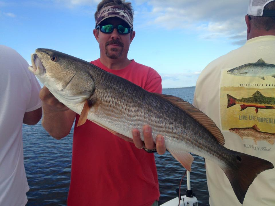 lots of big redfish today at cape san blas perfect cast